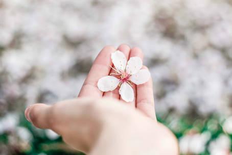 Mindfulness in Val Camonica – Presentazione del corso