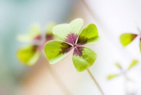 Mindfulness – I 4 elementi del benessere